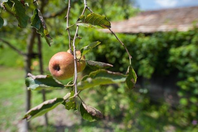 Appelbomen